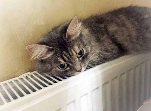 Стальний панельний радіатор кіт зверху.