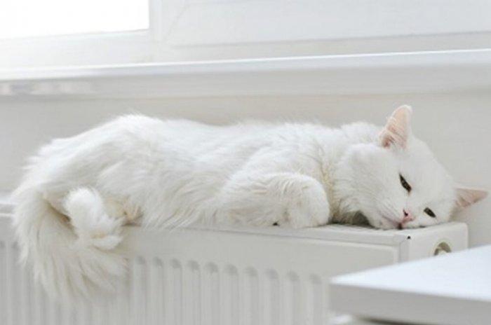 Кіт на радіаторі.